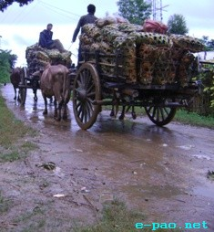 Ghost of bad road condition haunts CCPur pineapple farmers